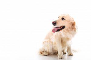 פנסיון לכלבים בפתח תקווה