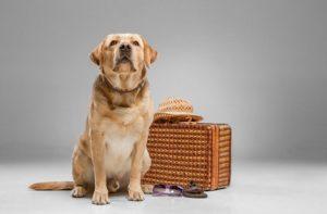 פנסיון לכלבים ברמת גן